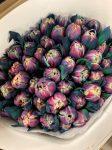 VIP tulipán 'Bubblegum'