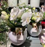 Cserepes White Angel orchidea, kerámia kaspóval