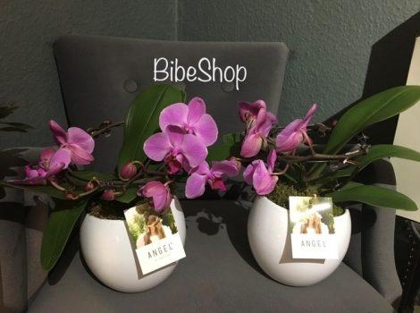 Cseepes Pink Angel orchidea, kerámia kaspóval