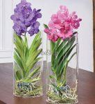 Cserepes Vanda orchidea, henger alakú üvegvázában