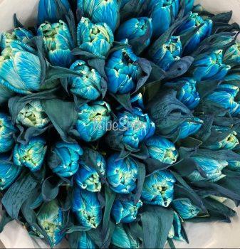 VIP tulipán
