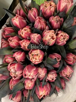 VIP tulipán 'Red Parrot'